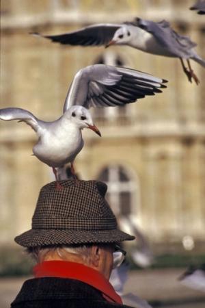 medium_oiseau-mouettegoeland-mer-chapeau-jardin-853441.jpg