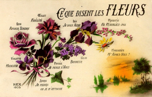 langage fleurs.jpg