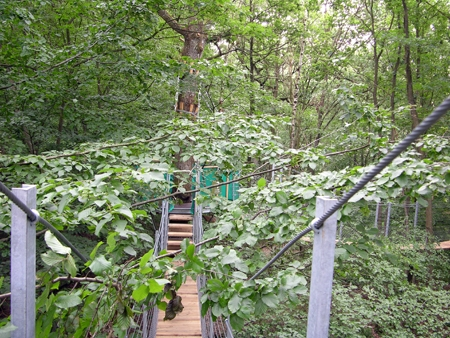 Promenade dans les arbres mots locaux for Promenade dans les yvelines
