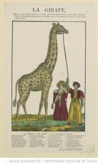 girafe_jardin des plantes.jpg